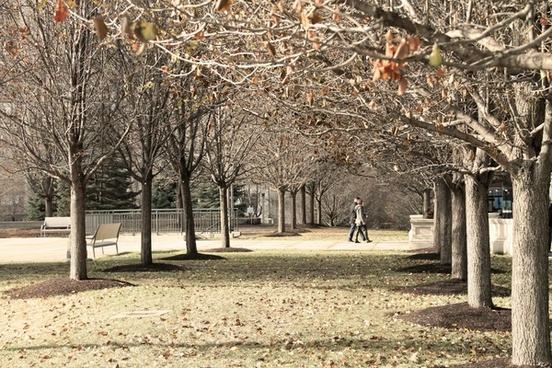 couple walking in park with bare trees