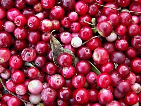 cranberries black berries of the wild fruits