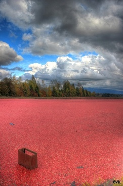 cranberries field farm