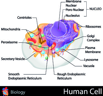 creative biology with medicine infographic vector