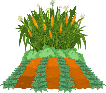 corn field free vector download 565 free vector for commercial use rh all free download com  cornfield clip art free