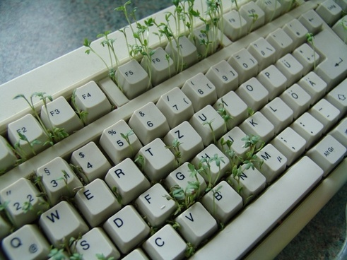 cress spice plant