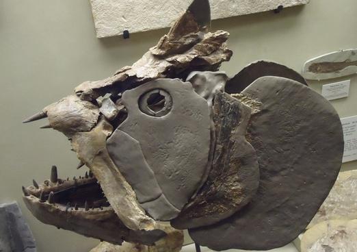 cretaceous fish skull