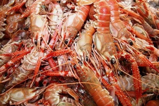 crevettes shrimp seafood