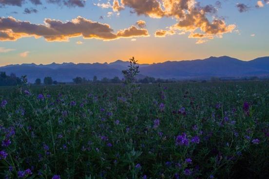 cropland dawn daytime evening flower grassland