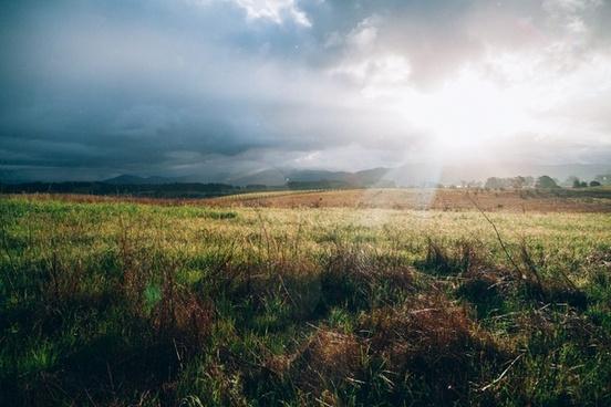 cropland environment evening field fog grass