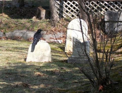 crow on gravestone