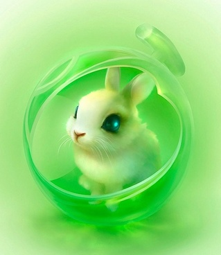 cute bunny hd picture