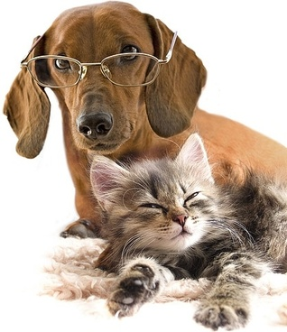 cute cat and dog picture 10