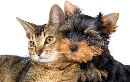 cute cat and dog picture 2