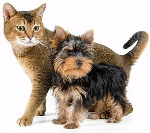 cute cat and dog picture 3