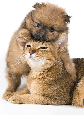 cute cat and dog picture 4