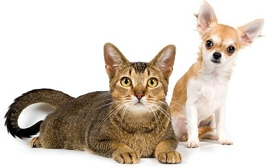 Image result for cat and dog stock image