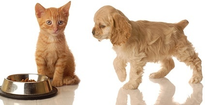 cute cat and dog picture 9