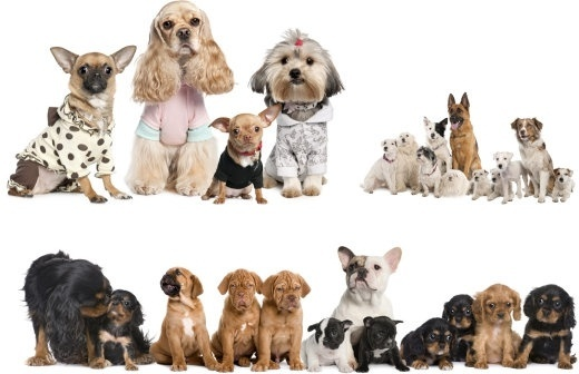 Cute Pets Hd Free Stock Photos Download 4 390 Free Stock Photos For Commercial Use Format Hd High Resolution Jpg Images