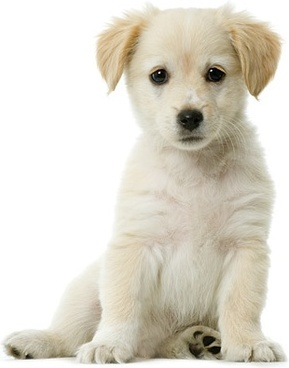cute dog photo picture 7