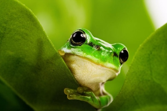 cute frog 02 hq pictures