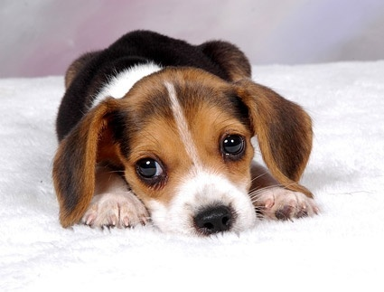 cute puppy photo picture 11