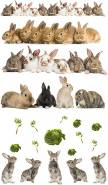 cute rabbit definition picture