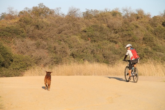 cyclist riding next to dog