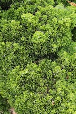 cypress background