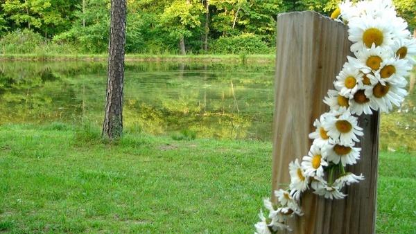 daisy pond