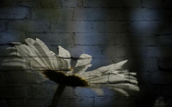 daisy texture flower