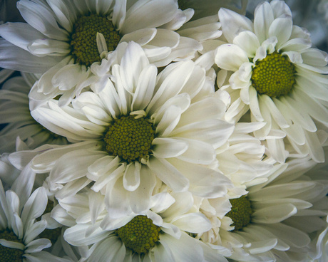 daisys for my sweetheart