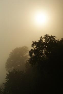 dark dawn fog foggy forest landscape light mist