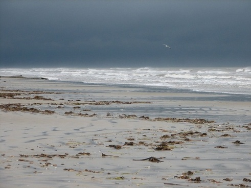 dark sky sandy shore