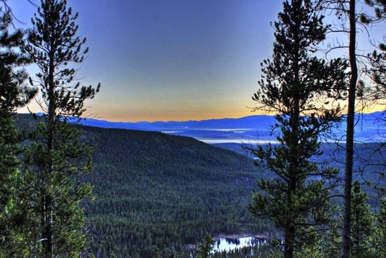 dawn between the trees at mount elbert colorado