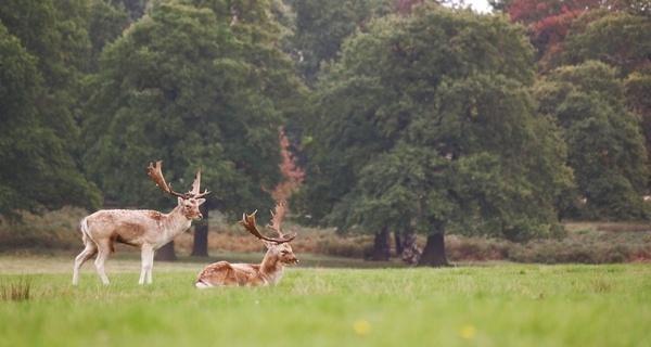 daytime deer field forest grass grassland landscape