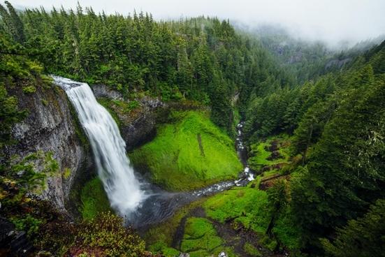 daytime forest idyllic landscape lush moss mountain