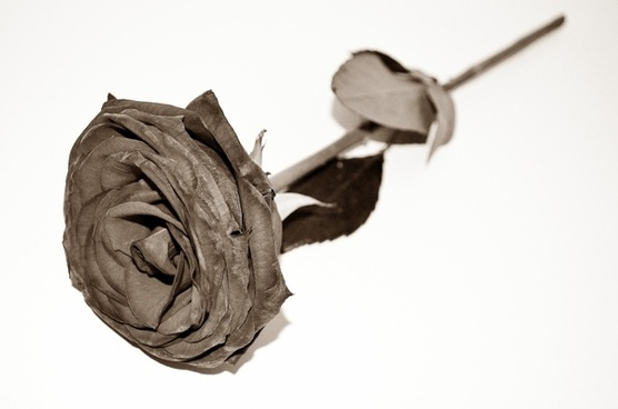dead roses end