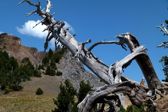dead tree hills