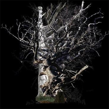 dead tree psd 1