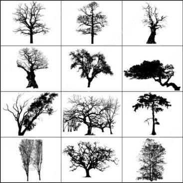 dead trees brush