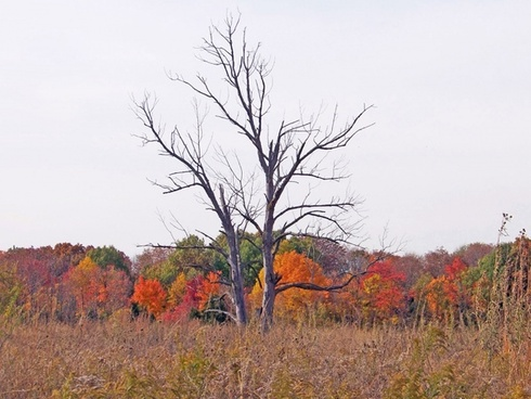 dead trees in autumn field