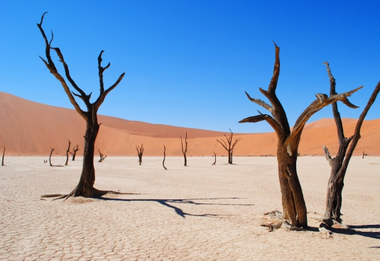 leafless dried tree on desert