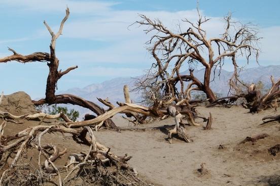 death valley scrubs sand