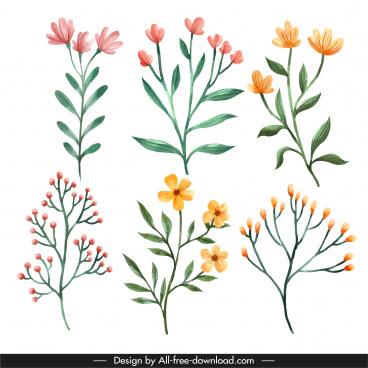 decorative botany icons bright classical handdrawn design