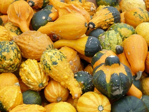decorative squashes pumpkins yellow