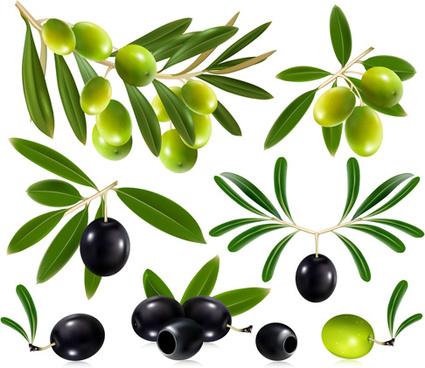delicate olives vector design