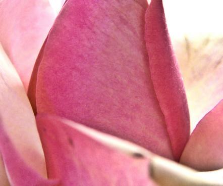 delicate rose skin