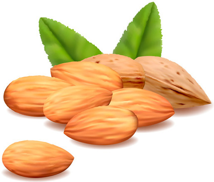 delicious almonds vector graphics