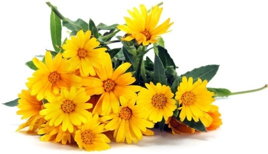 delicious yellow daisy definition picture