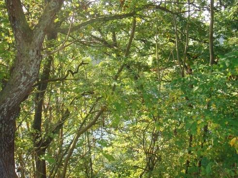 denmark trees forest