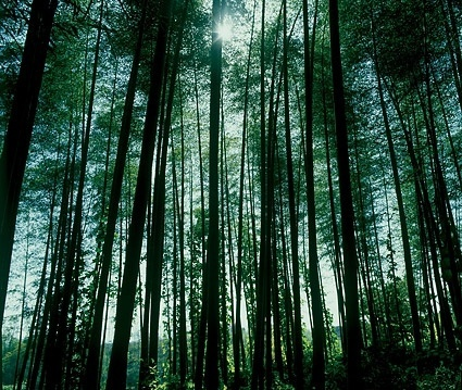 dense forest picture