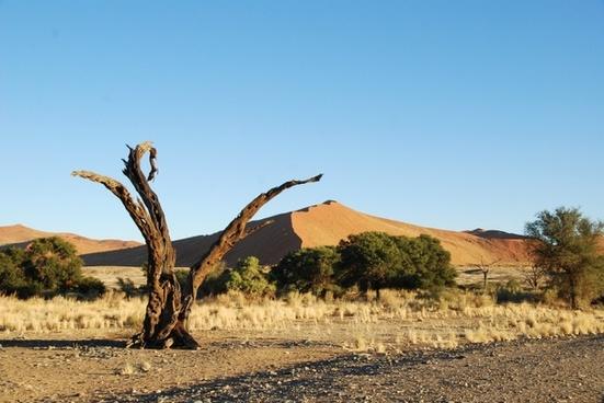 desert dune namibia