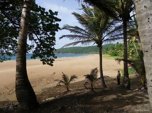 deshaies beach